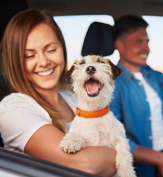 Happy Girl with Dog in Vehicle
